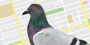 Google Pigeon Update 2014 lokale zoekresultaten